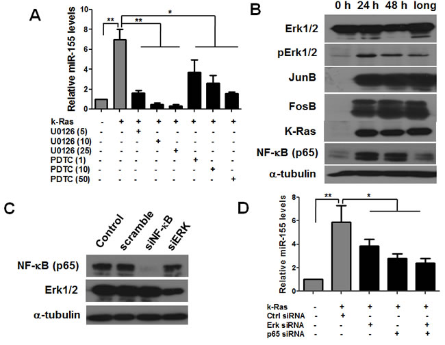 K-Ras induces miR-155 expression through MAPK and NF-κB pathway in T-Rex/K-Ras cells.