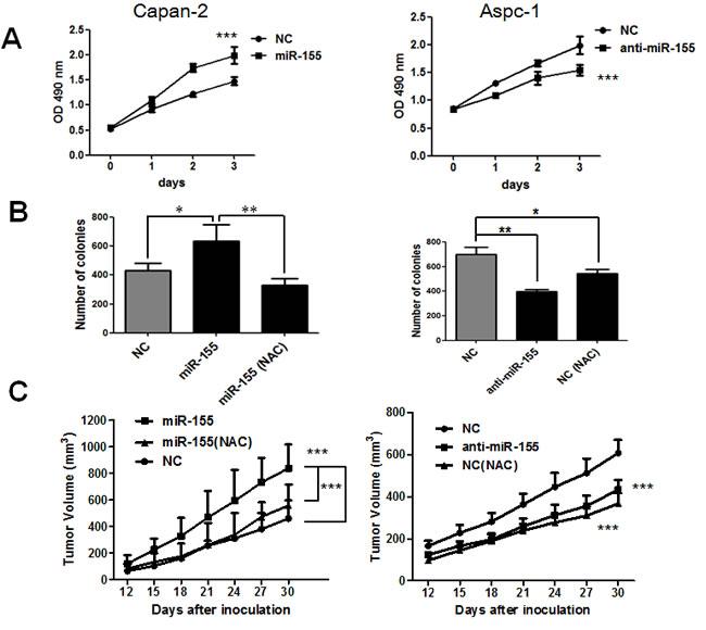 MiR-155 promotes pancreatic cancer proliferation through ROS generation