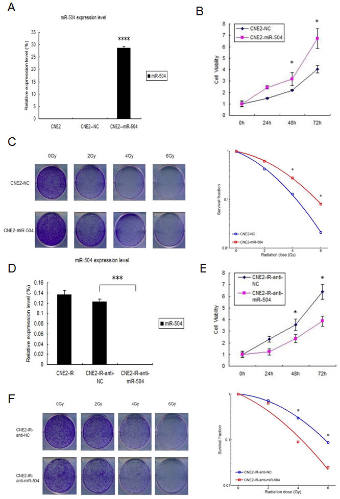 miR-504 promotes NPC cell growth, reduces the number of cells undergoing apoptosis induced by radiation and leads to radio-resistance of NPC cell lines.