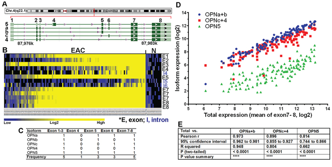 Transcriptional co-overexpression of all five OPN isoforms in primary EAC.