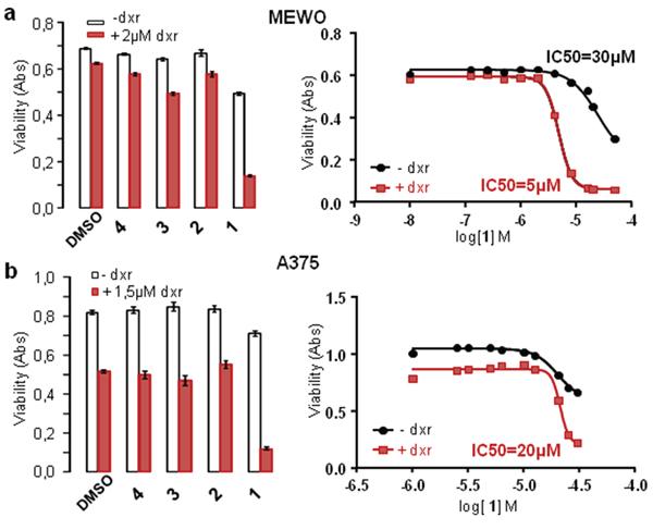Panicein A hydroquinone increases doxorubicin cytotoxicity on melanoma cells.