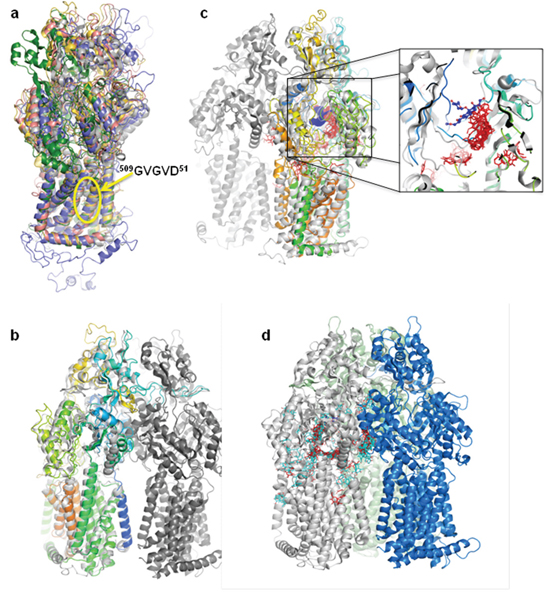 Panicein A hydroquinone presents a strong docking cluster close to the doxorubicin binding site in AcrB structure and in Patched structural model.