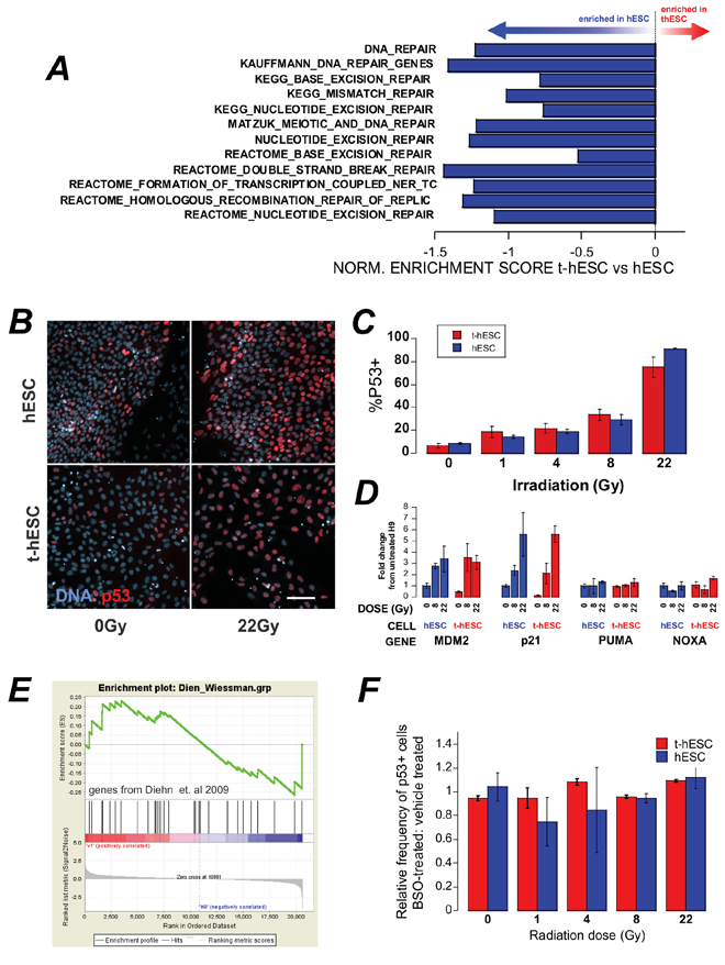 A. GSEA of a number of genesets related to DNA repair show an enrichment in hESC over t-hESC.