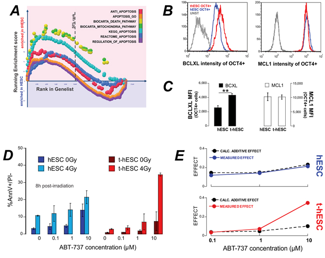 t-hESC are enriched for apoptosis and treatment with the BH3-mimetic ABT737 results in enhanced radio-sensitivity.