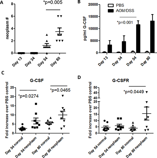 G-CSF and G-CSFR are increased in AOM/DSS treated mice.