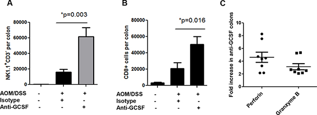G-CSF neutralizing antibody treatment induces cytotoxic cell influx and responses in AOM/DSS treated mice.