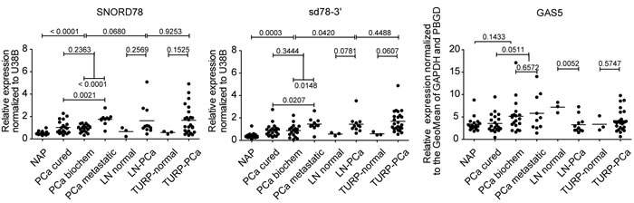 Q-PCR validation of snoRNA and sdRNA expression in an independent cohort of patient samples.