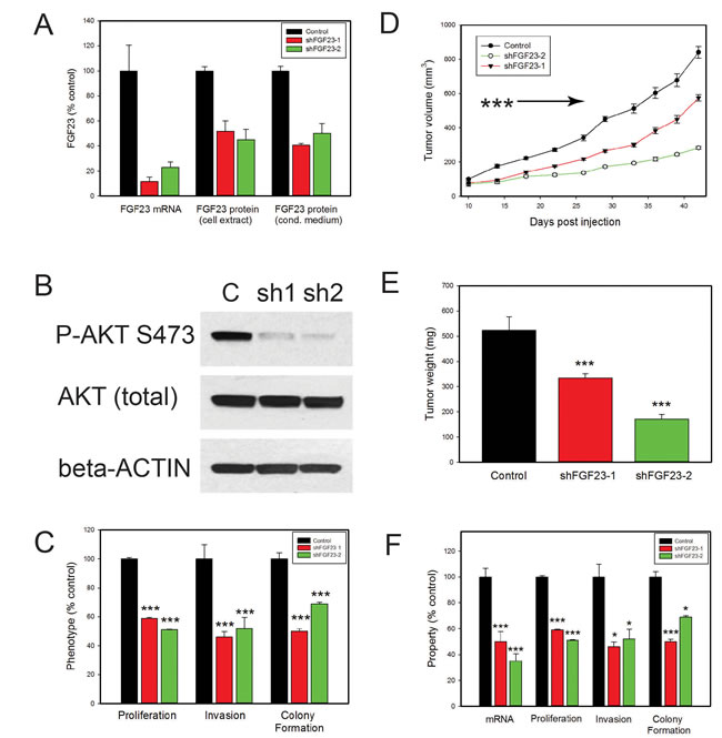 Biological effects of FGF23 knockdown on PCa cells.