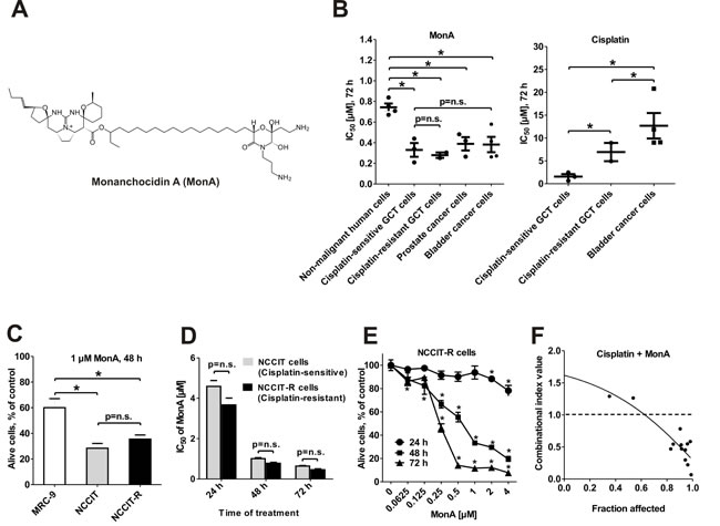 Effect of MonA on the viability of urogenital cancer cells and normal cells.