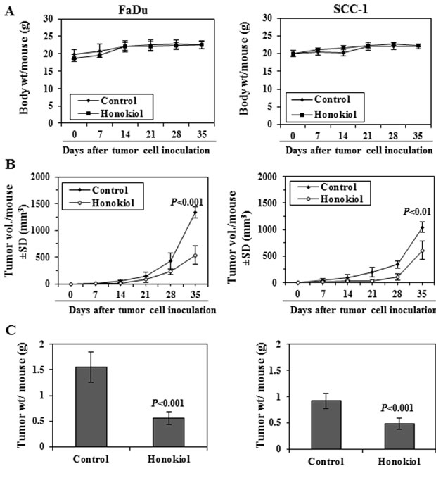 Administration of honokiol by oral gavage inhibits the growth of FaDu and SCC-1 cells grown as tumor xenograft in athymic nude mice.
