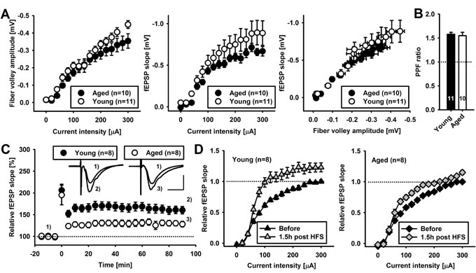 Acute hippocampal brain slices retain key properties during ageing.