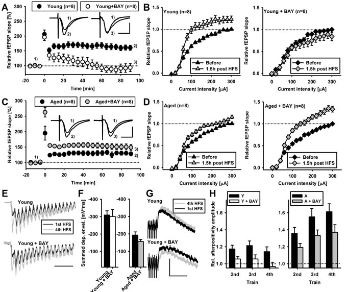 Glycogen phosphorylase inhibitor, BAY U6751, differentially affects LTP in young and aged animals.