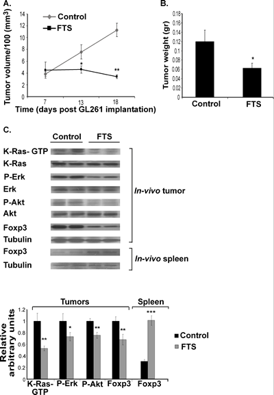 FTS inhibits the growth of subcutaneous GL261 tumors and decreases their downstream Ras proteins and their Foxp3 levels