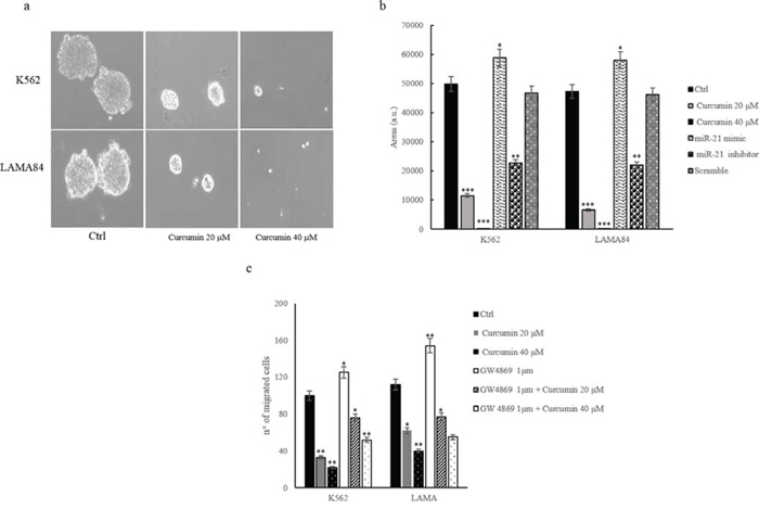 a. Colony formation assay shows that Curcumin treatment caused a decrease of K562 and LAMA84 colonies area with respect to control cells.