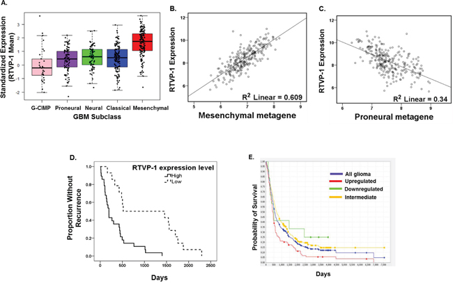 RTVP-1 is highly expressed in the mesenchymal subtype of GBM and predicts poor clinical outcome.
