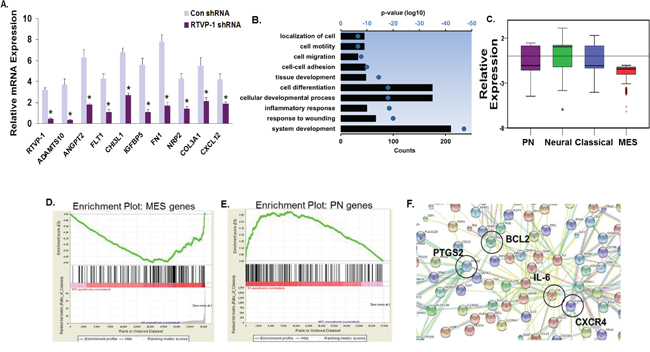 Global gene network changes induced by silencing of RTVP-1 in glioma cells.