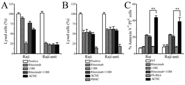 In vitro tumor suppression of ACNC against Raji and Raji-anti cells.