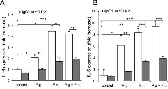 Increased expression of IL-6 in oral cavity SCC cell lines following co-culture with P. gingivalis and F. nucleatum.
