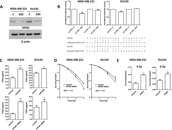 HPGD is a target of miR-620, reduces cellular PGE-2 levels and induces radiation resistance.