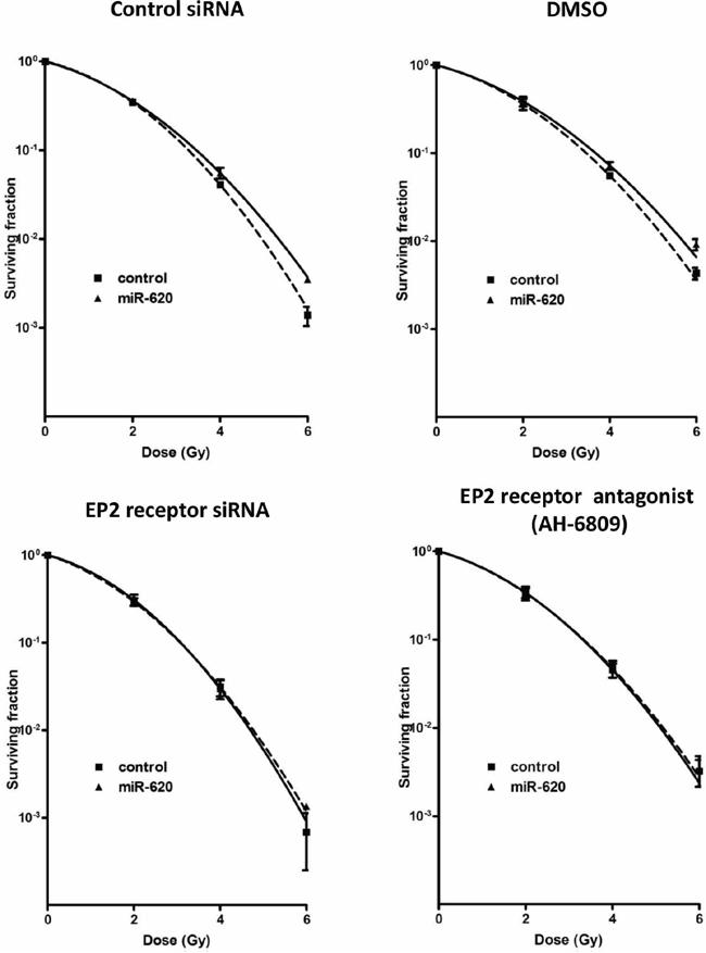 EP2 receptor is responsible for miR-620-mediated radioresistance.