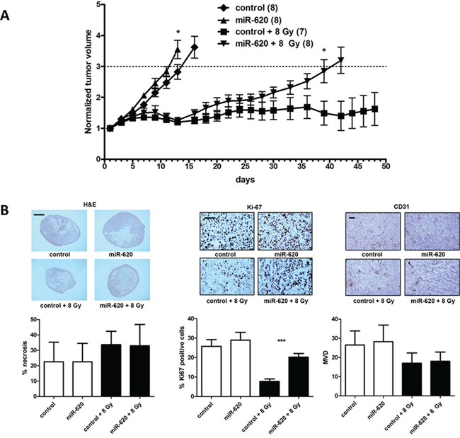 miR-620 promotes tumor radioresistance in vivo.
