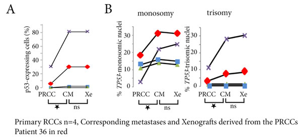 p53-expressing tumor cells and TP53 copy number abnormalities in primary RCCs, corresponding metastases and xenografts derived from the primary RCC.