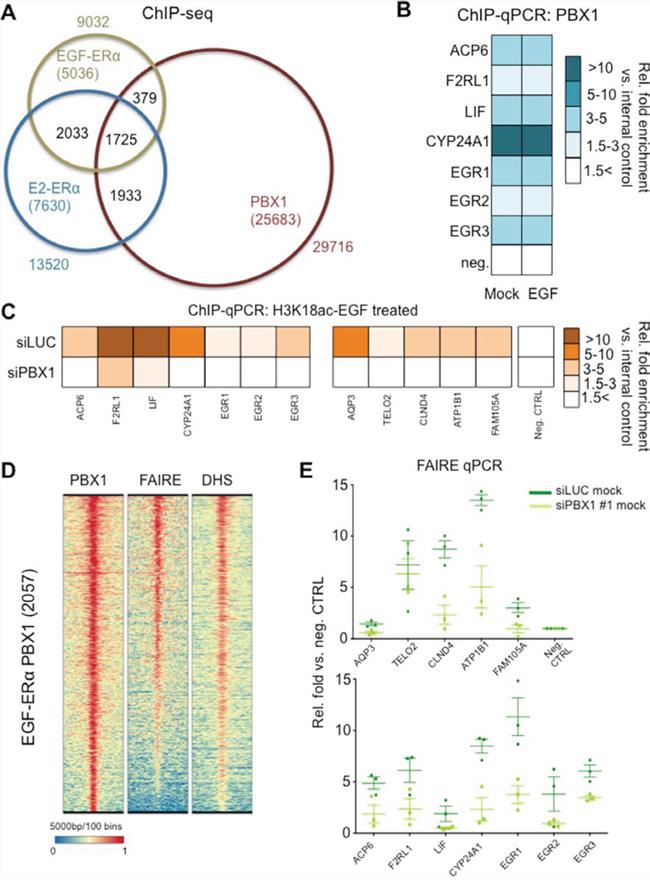 PBX1 regulate chromatin status at EGF-ERα binding sites.