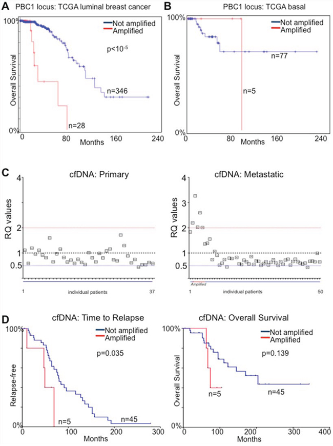 PBX1 amplification is a prognostic biomarker for ERα breast cancer.