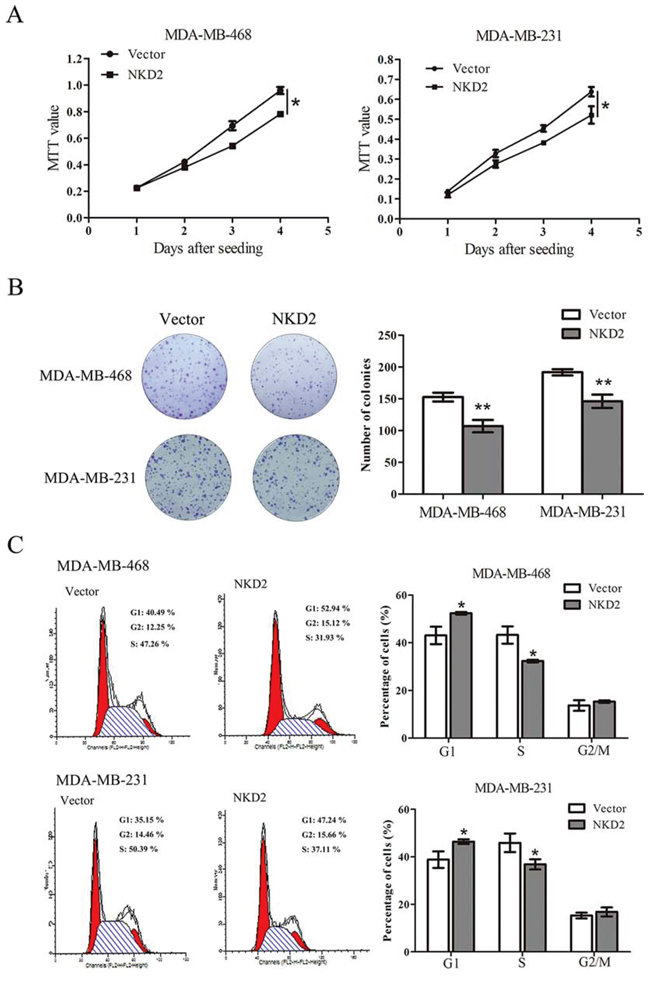 NKD2 suppresses breast cancer cell proliferation.