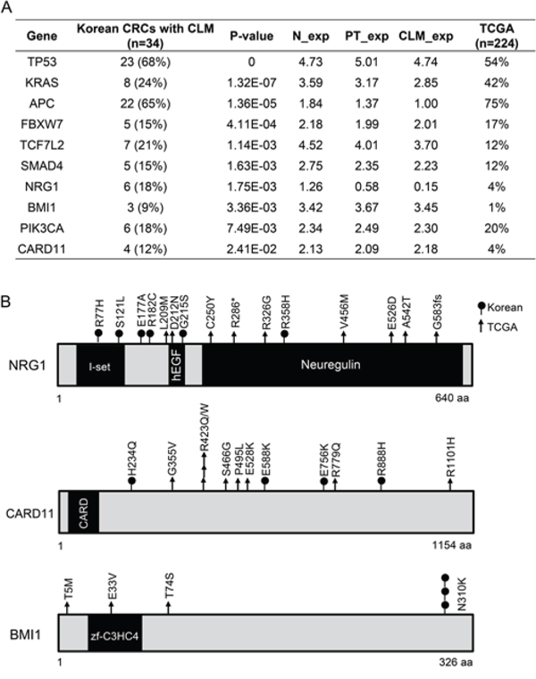 Significantly mutated genes in 34 Korean CRC patients with CLMs.