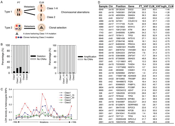 Co-occurrence of Class 1-H or Class 2 mutations with chromosomal aberrations.
