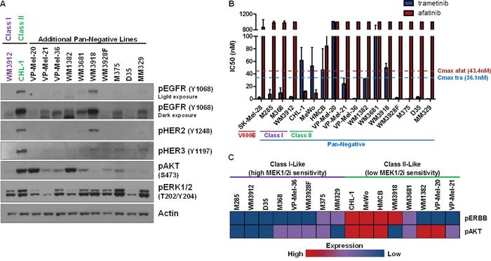 ERBB and AKT Activation Status May Predict Sensitivity to MEK1/2 Inhibition.
