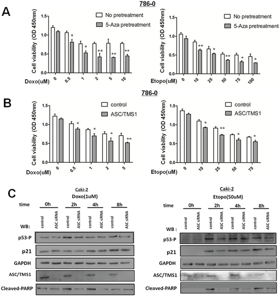 ASC/TMS1 expression sensitizes human renal cancer cells to DNA damaging agents.