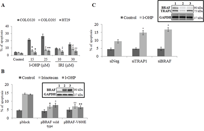 Activation of BRAF signaling protects from apoptosis.