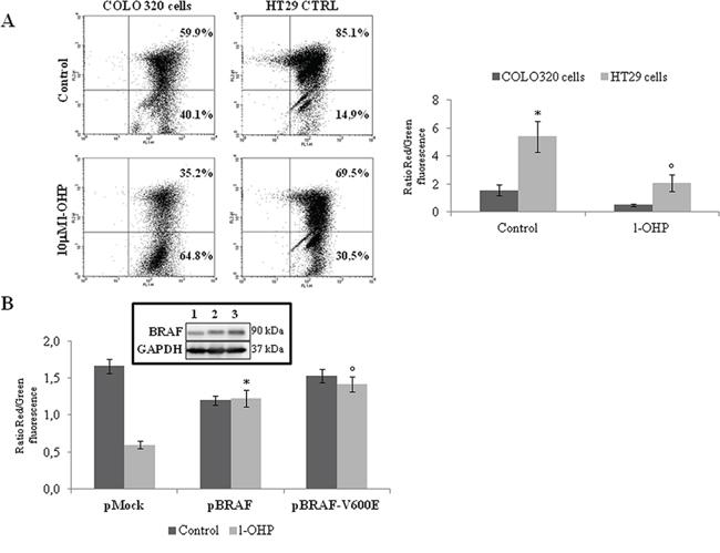 BRAF antiapoptotic activity involves the modulation of mitochondrial apoptotic pathway.