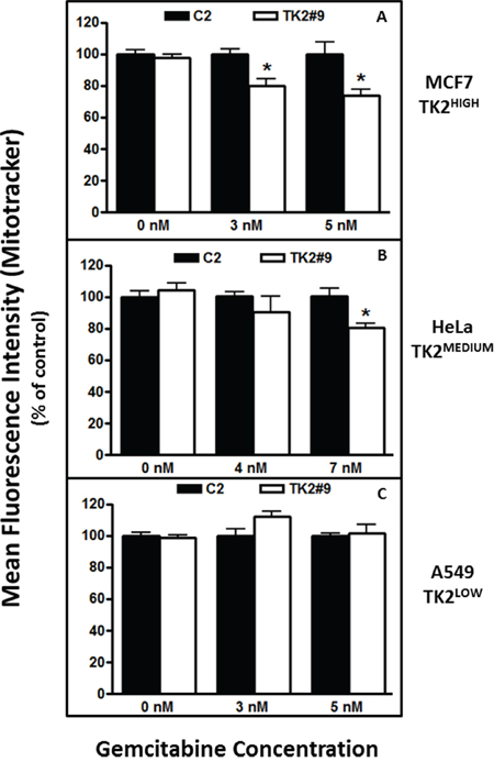 TK2 siRNA and gemcitabine decrease mitochondrial activity in TK2-expressing MCF7 and HeLa cells, but not in TK2LOW A549 cells.