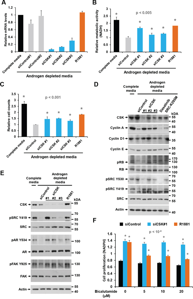 Effect of CSK knockdown on androgen-independent proliferation and SRC activity in LNCaP cells.