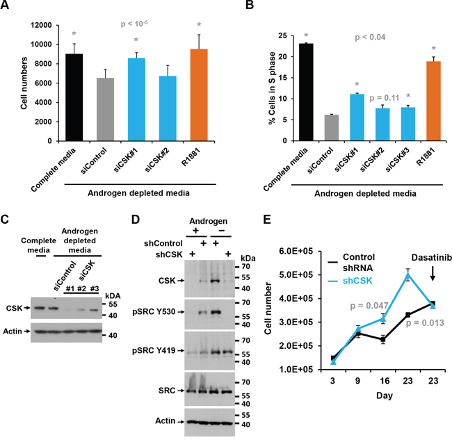 Effect of CSK knockdown on androgen-independent proliferation and SRC activity in LAPC4 cells.