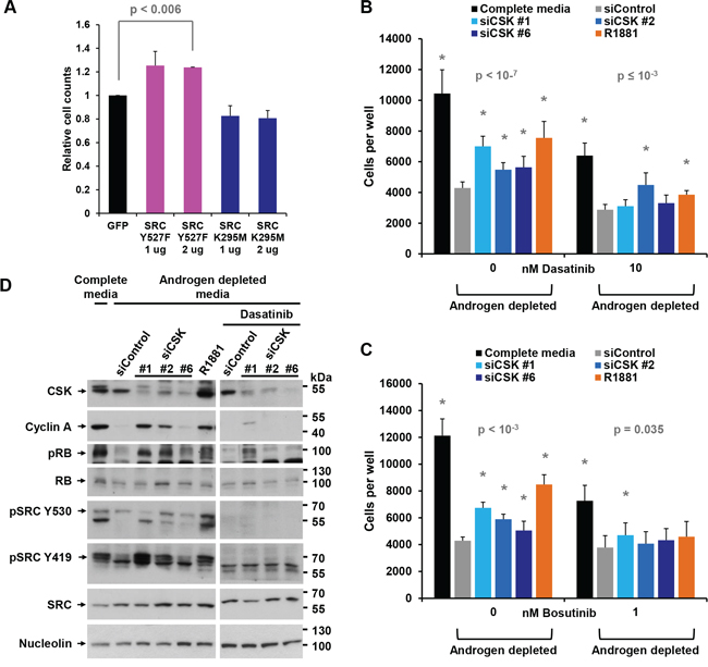 Androgen-independent growth induced by CSK knockdown is mediated by SRC activity.