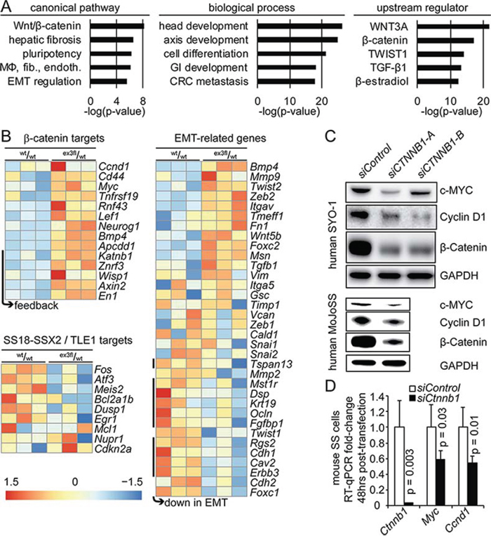 Stabilization of β-catenin drives an EMT transcriptional signature and increases expression of TCF/LEF target genes.