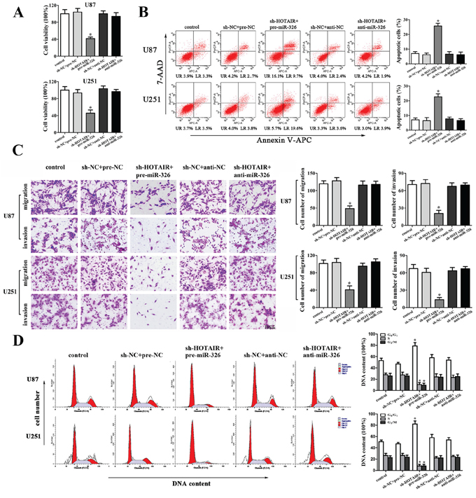 MiR-326 mediated the tumor-suppressive effects of HOTAIR knockdown on glioma cell lines.