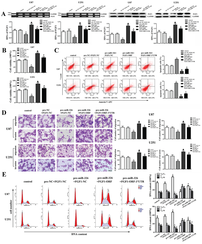 FGF1 mediated the tumor-suppressive effects of miR-326 over-expression on glioma cell lines.
