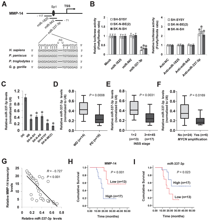 miR-337-3p is under-expressed and inversely correlated with MMP-14 levels in NB tissues and cell lines.