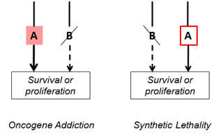 Oncogene addiction and synthetic lethality