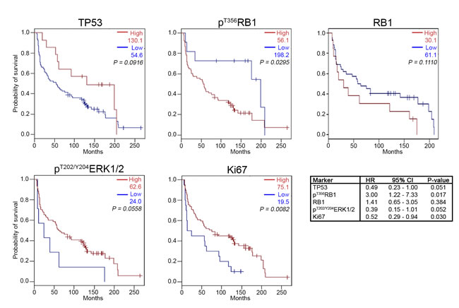 Kaplan-Meier survival analysis for high and low expression levels of TP53, RB1, p