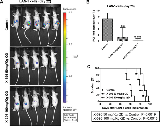 Dose-dependent efficacy of X-396 treatment in LAN-5 cells orthotopic-bearing mice.