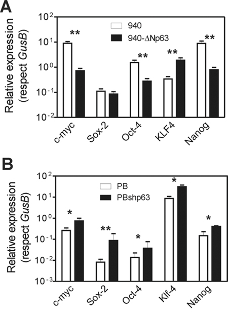 Altered p63 expression promotes altered expression of stemness factors.