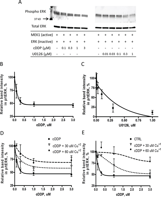 Inhibition of the activity of recombinant MEK1 by cDDP and U0126.