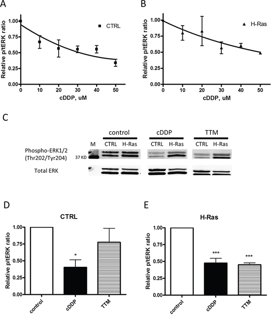 Inhibition of EKR1/2 phosphorylation by cDDP and TTM in whole cells.