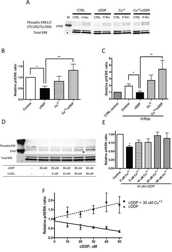 Cu counteracts cDDP-induced inhibition of ERK phosphorylation in whole cells.